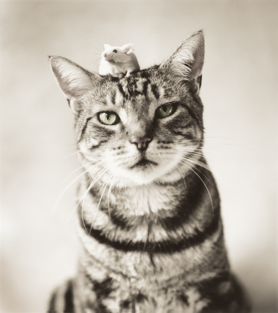 Tabby cat with mouse and head, black and white image